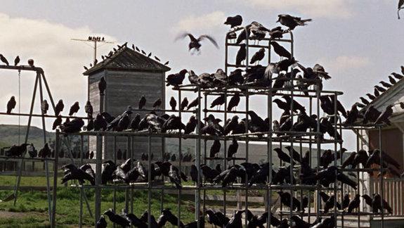«Птицы»
