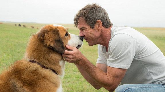 «Собачья жизнь»