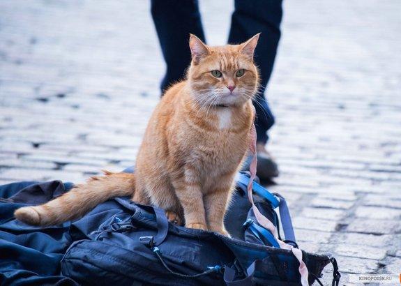 «Уличный кот по кличке Боб»