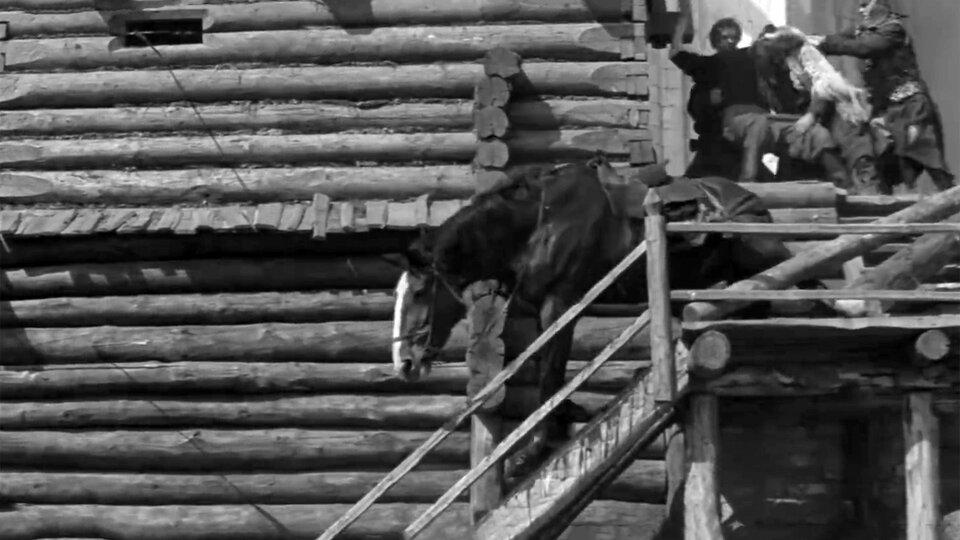 «Страсти по Андрею»: через несколько секунд эта лошадь упадет с лестницы, переломав ноги, а потом ей проткнут горло