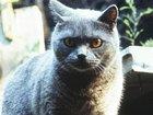 Хуан Карлос Фреснадильо переделает «Кладбище домашних животных»