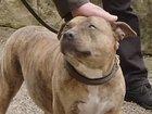 Энтони Хопкинс снялся с самой одинокой собакой в мире