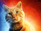 Мех и латекс: Животные в супергеройском кино