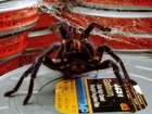 Джеймс Ван спродюсирует ремейк комедийного хоррора «Боязнь пауков»