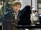 В сиквеле «Фантастических тварей» у Ньюта будет брат