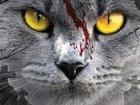 Кадры из «Кладбища домашних животных»: Мертвые должны оставаться мертвыми