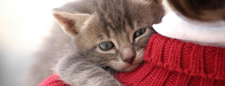 Как выбрать и купить котенка. Несколько важных советов