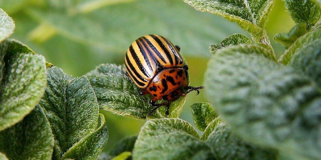 Прочитайте: 5 средств для обработки растений от вредителей — подборка в  Журнале Маркета