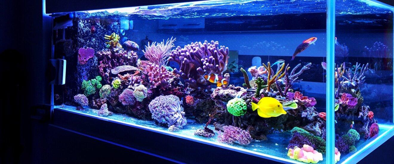 Прочитайте: Как оборудовать домашний аквариум своими руками — советы в Журнале Маркета