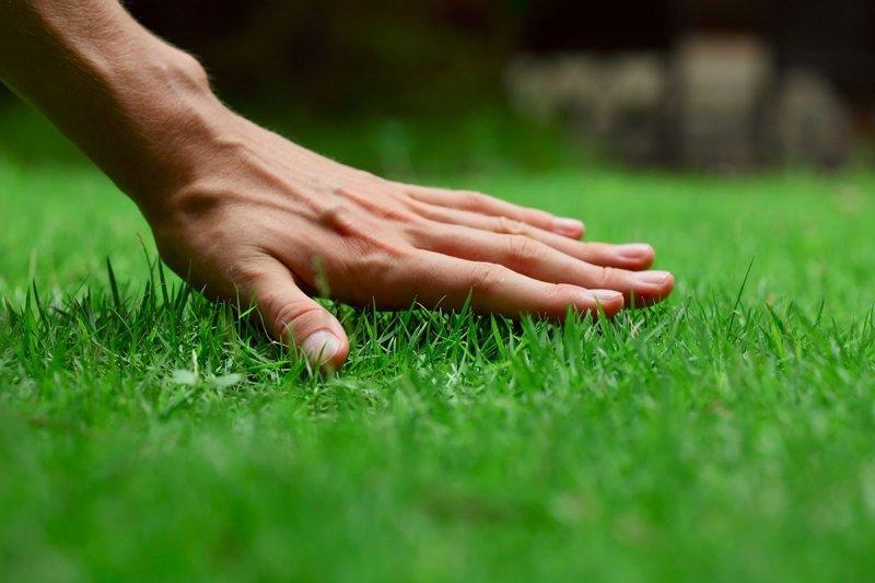 Газон - Декоративный газон Для глинистых почв серия Стандарт