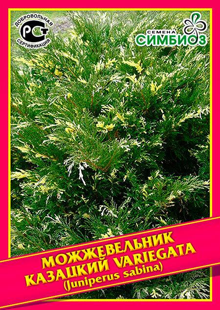 Семена Симбиоз Можжевельник Казацкий «Variegata», 5 шт.