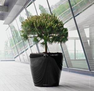 Крассула (денежное дерево) + Lechuza