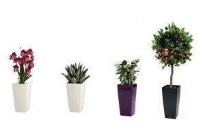 Комплект из 4 растений
