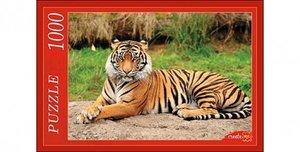 Рыжий кот тигра