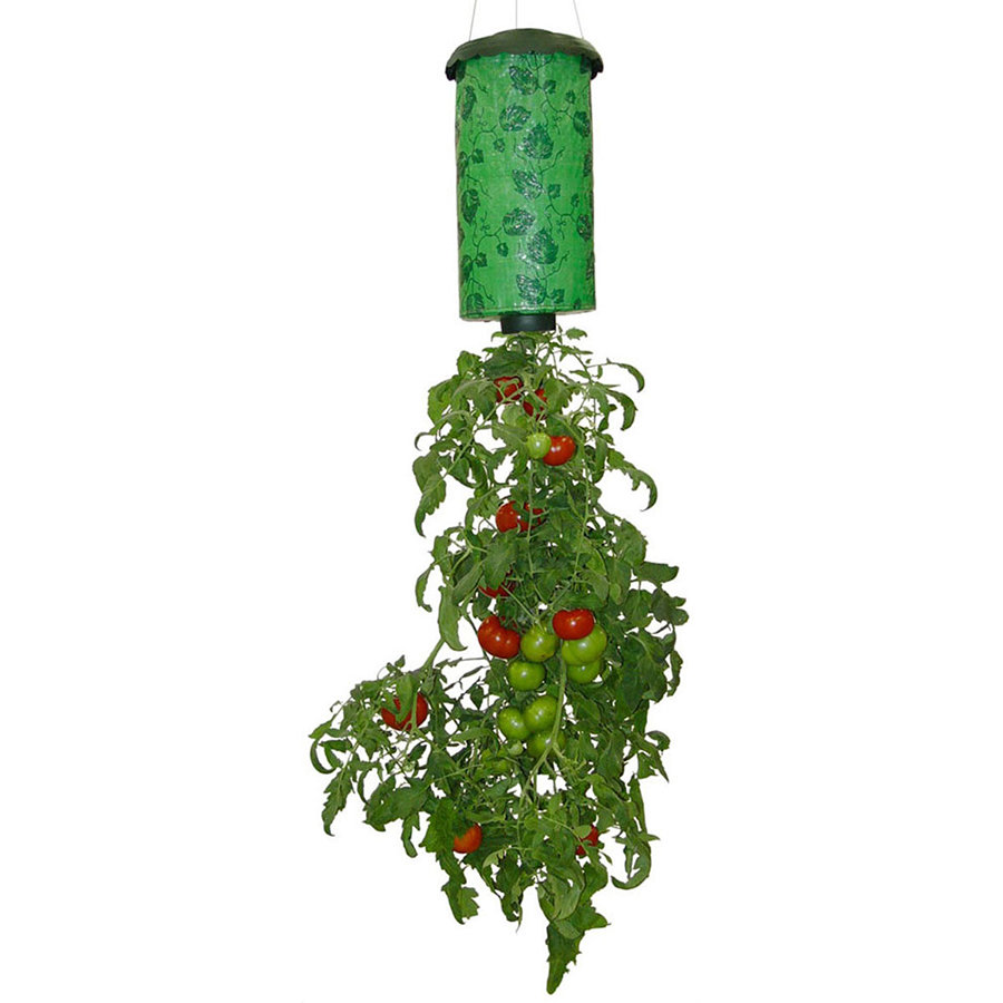 Topsy Turvy - вертикальное выращивание помидоров
