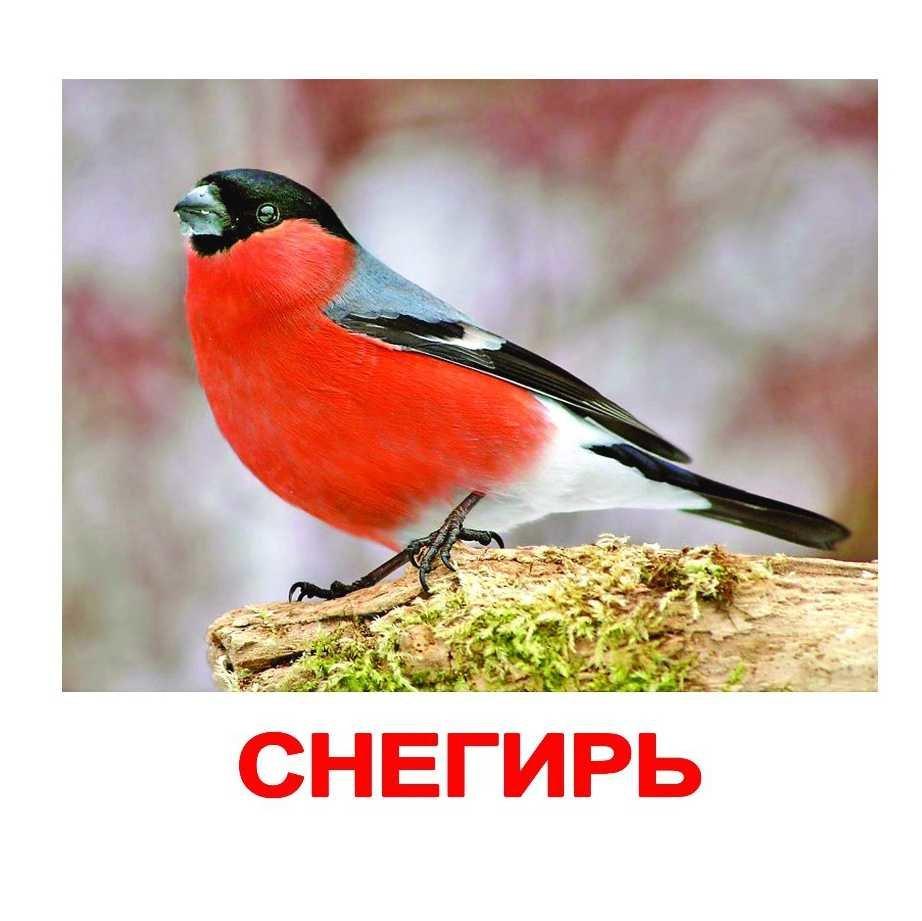 символ снегири птицы картинки с названиями примеряйте себя разные