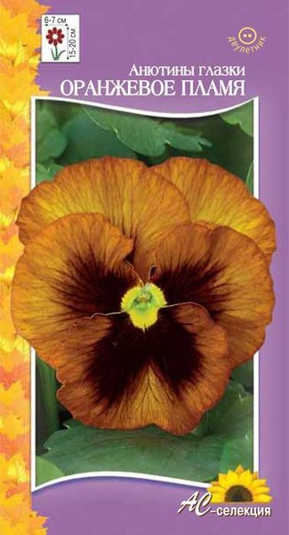 Цветы двулетние - Анютины глазки (фиалка виттрока) Оранжевое пламя