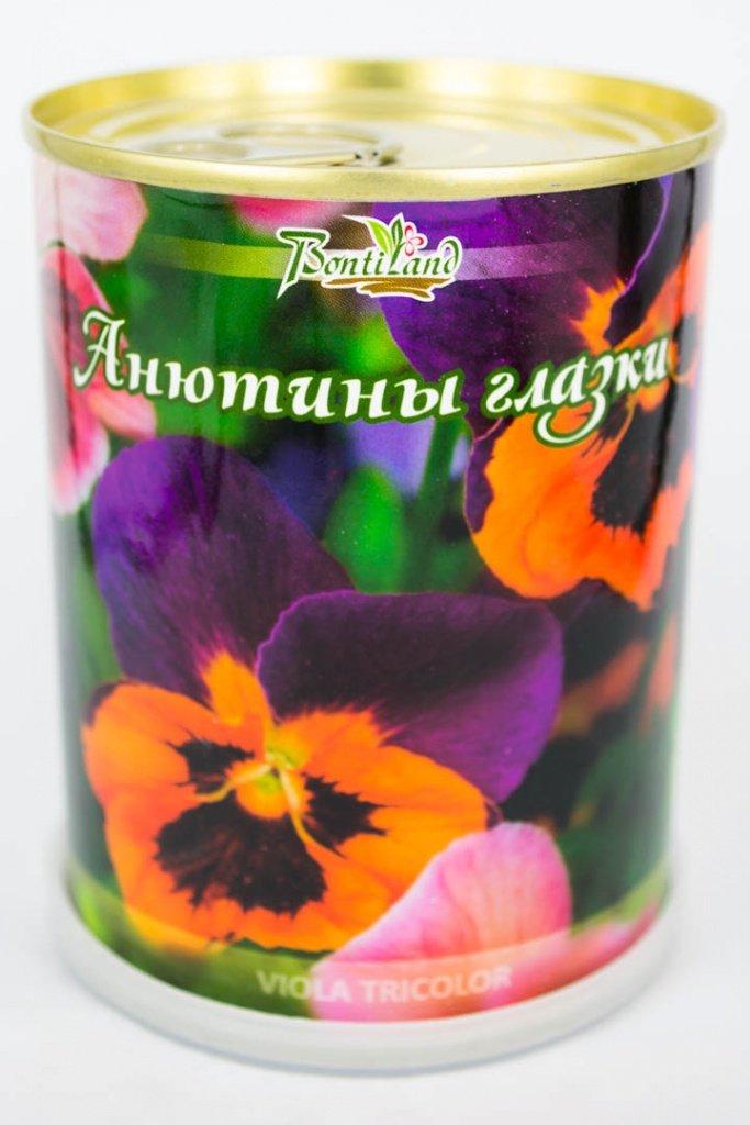 Растение BontiLand Анютины глазки 410428