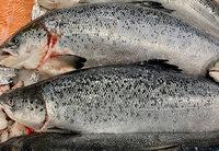 Рыбная гастрономия