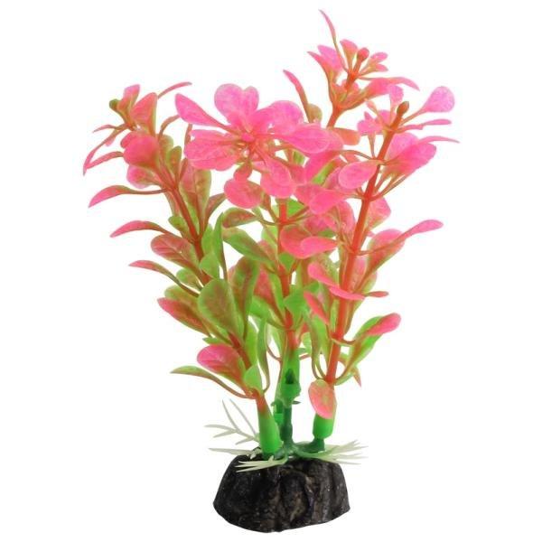 Растение аквариумное