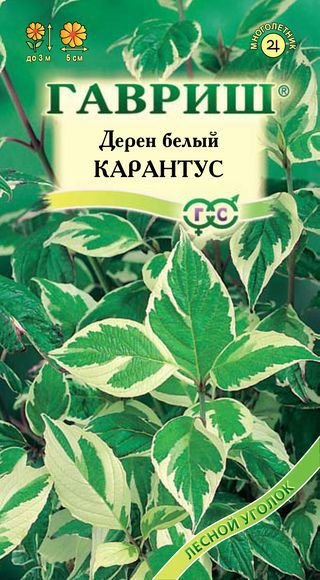 Семена. Дерен белый Карантус (10 пакетов по 0,1 грамма) (количество товаров в комплекте: 10)