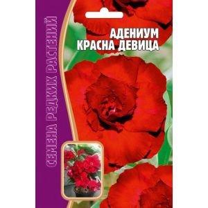 Семена цветов Адениум Красна девица, 3шт
