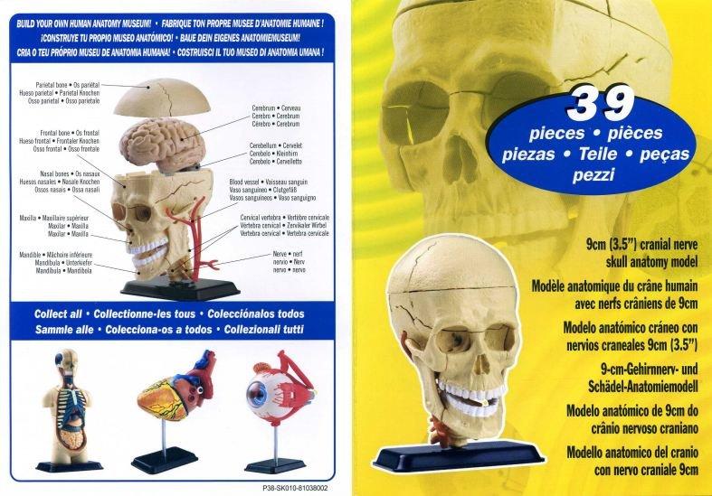 Набор для исследований Edu Toys Анатомический набор череп