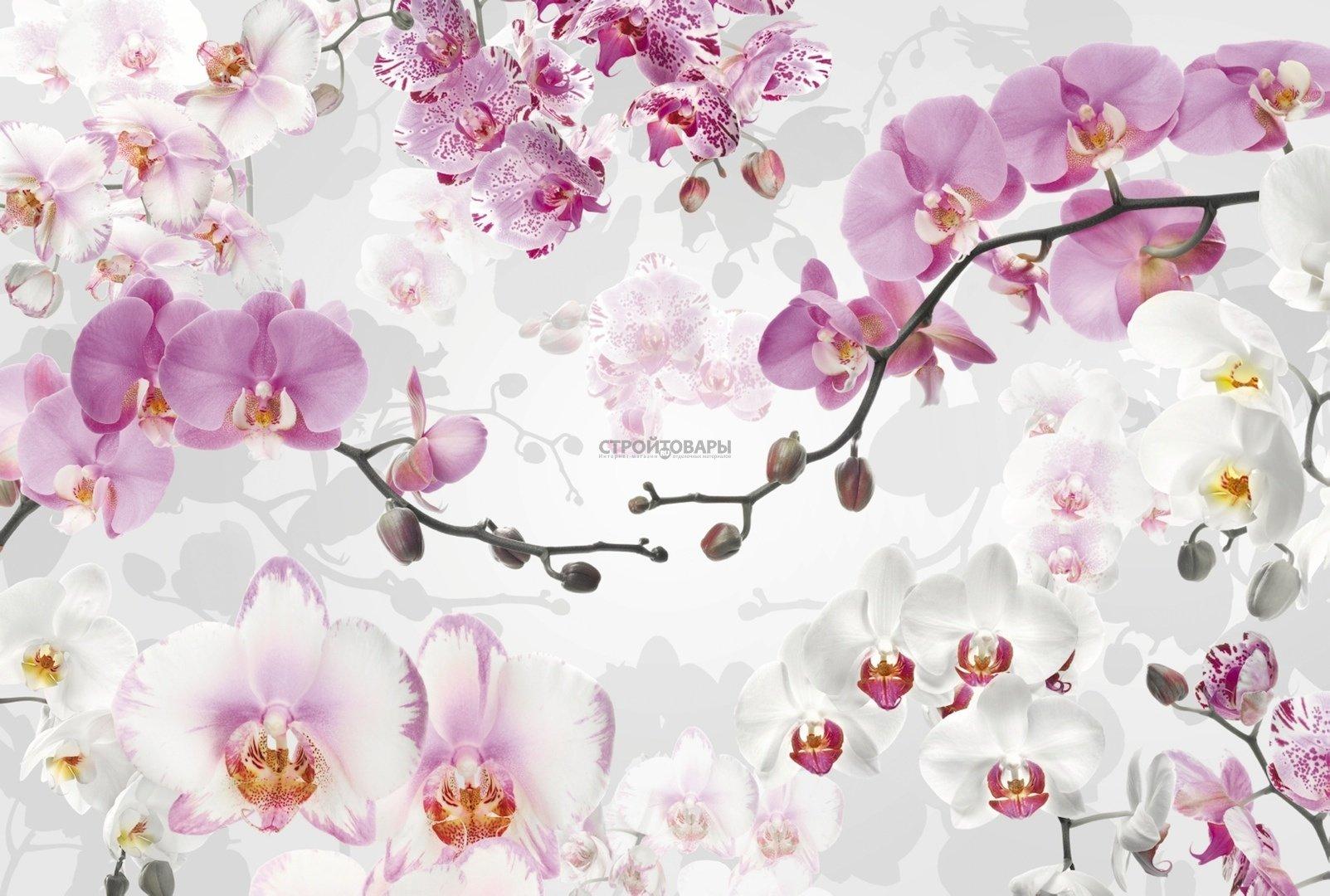 Фотообои Фотообои Komar Floral XXL4-032 Allure