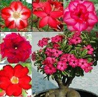 Домашние цветы купить в калининграде купить набор тарелок офелия мелкие цветы чехия