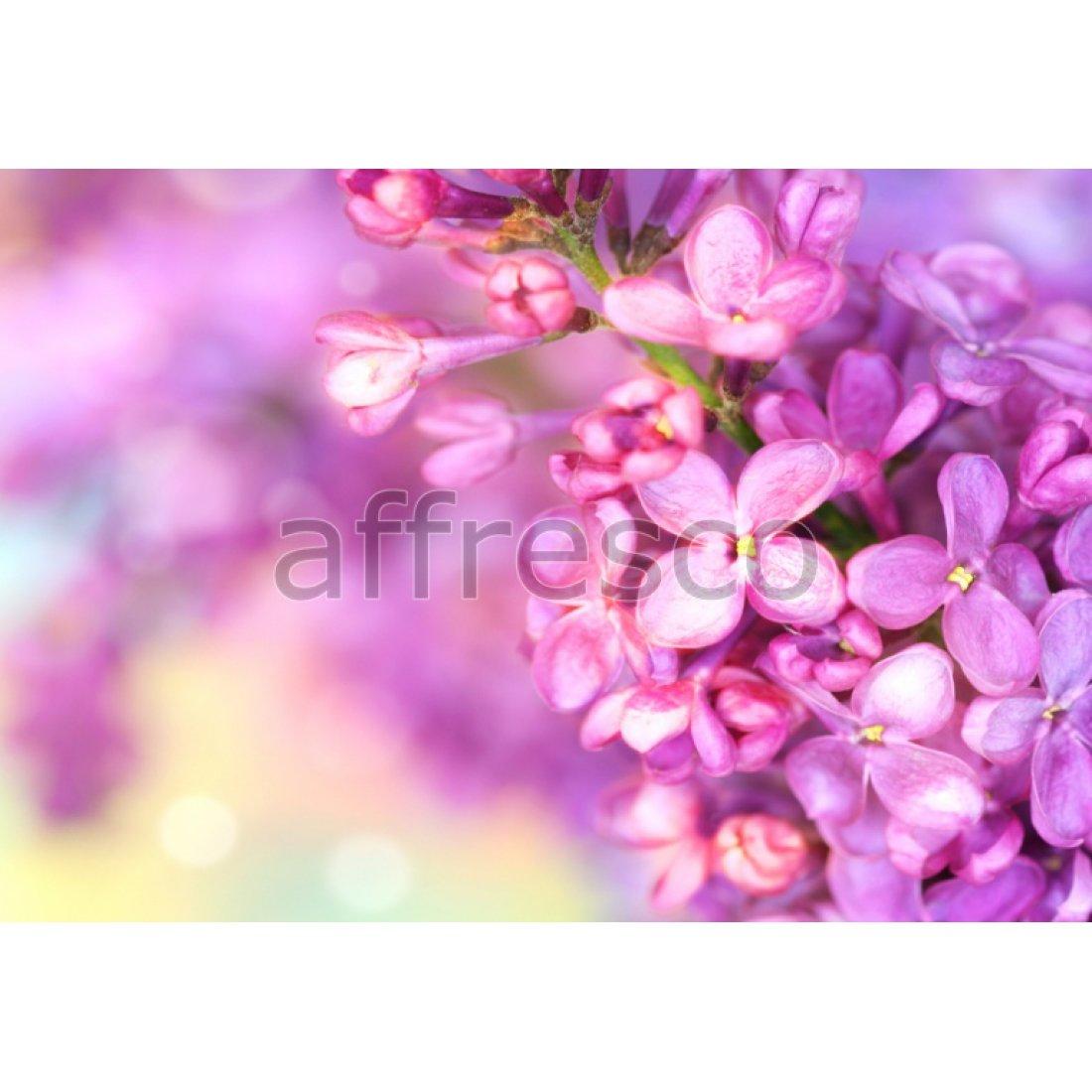 Фреска Affresco Цветочки сирени арт. F7217
