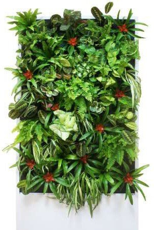 Фитостена 200 х 100 х 11 см (Констукция + 90 растений)