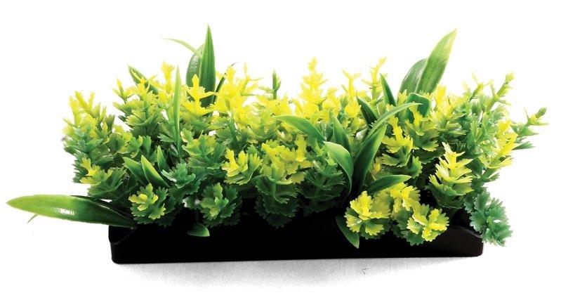 Композиция из аквариумных растений