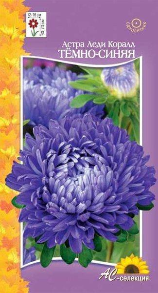 Цветы однолетние - Астра Шаровая Леди Коралл темно-синяя