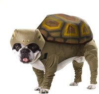 Костюм для собак California Costumes Костюм для собаки Черепаха, S