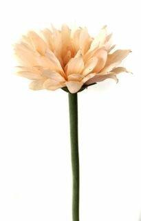 Гербера Экселанс бело-розовая 58 см