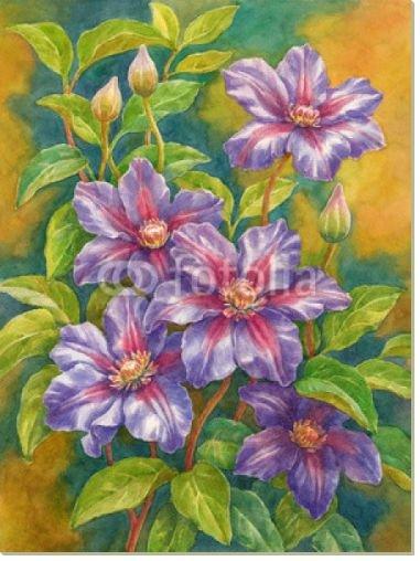 Постер Цветущий клематис, 79x106, Цветы, 21-й век