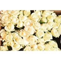 Роза срезанная сорт Аваланш, белого цвета,производство Россия