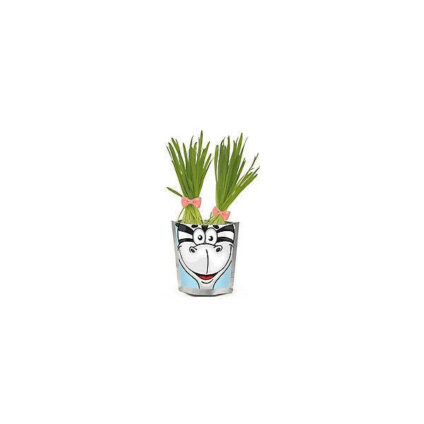 Выращивание растений Happy Plant Сафари Бегемот