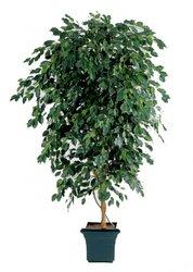 TREEZ COLLECTION Офисные аксессуары Искусственные деревья Фикус Бенжамина Де Люкс 210 10.31807N 210 см.