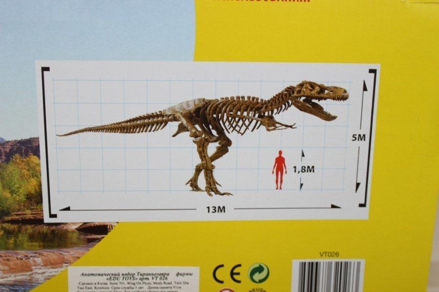 Набор для исследований Edu Toys Сборный макет скелет динозавра