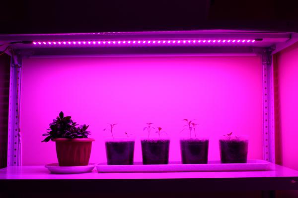 Фито освещение для стеллажей, шкафов, ниш: фитолампа для досвечивания/освещения рассады, выращивания фиалок, лука