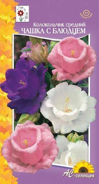 Цветы многолетние - Колокольчик Средний Чашка с блюдцем