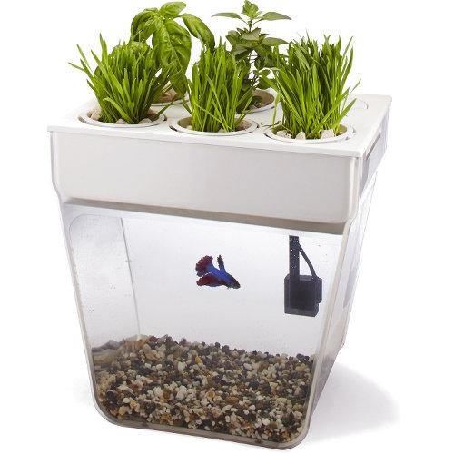 Акваферма AquaFarm