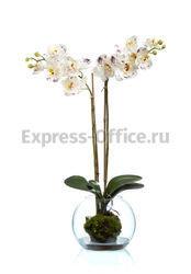TREEZ COLLECTION Композиция Орхидея Фаленопсис 10.03160270WH 400x400x700
