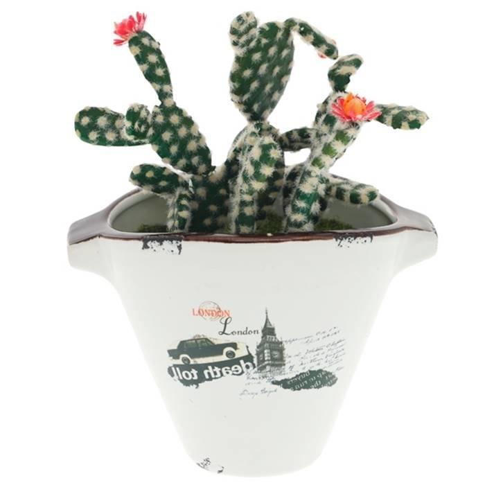 купить кактусы в астане