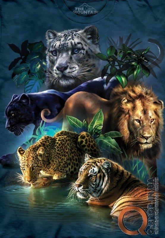 Анимация картинки льва и тигра