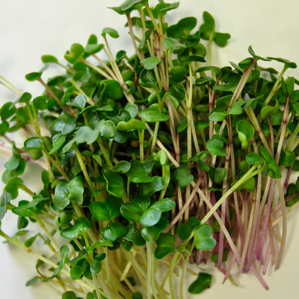 чем семена микрозелени отличаются от простых семян