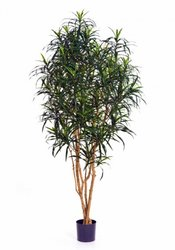 TREEZ COLLECTION Офисные аксессуары Искусственные деревья Драцена Анита 180 10.24006N 180 см.
