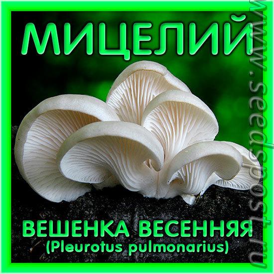 Мицелий зерновой Вешенка Весенняя, 150 мл