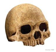 Декорация для террариума Hagen Exo-Terra Primat Skull